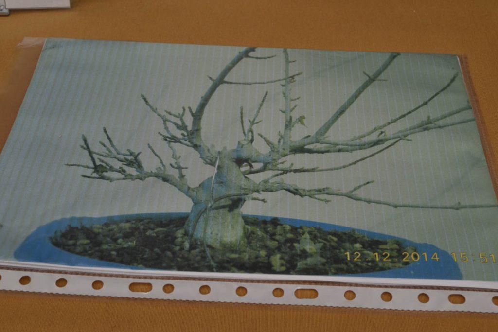 El árbol de partida tiene potencial