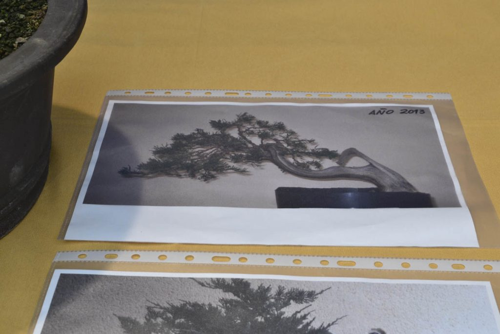 juniperus-sabina-grinon