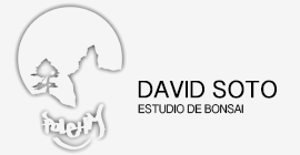 David Soto Estudio de Bonsai logo