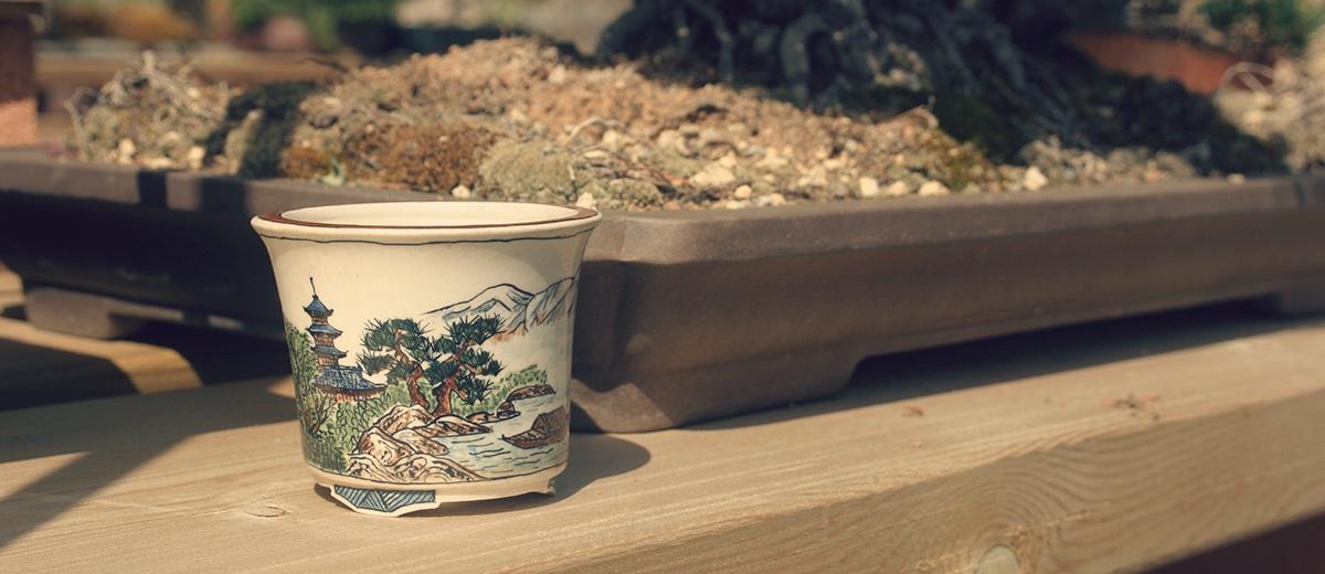 Maceta en bancal de bonsai