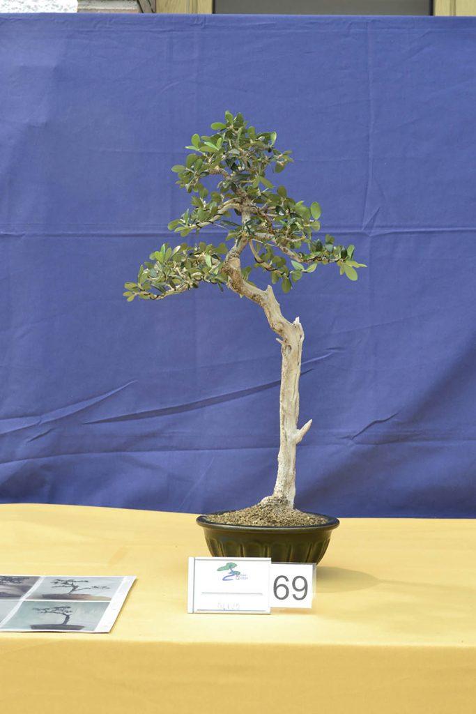 Buen arreglo de ramas para formar un árbol sencillo.