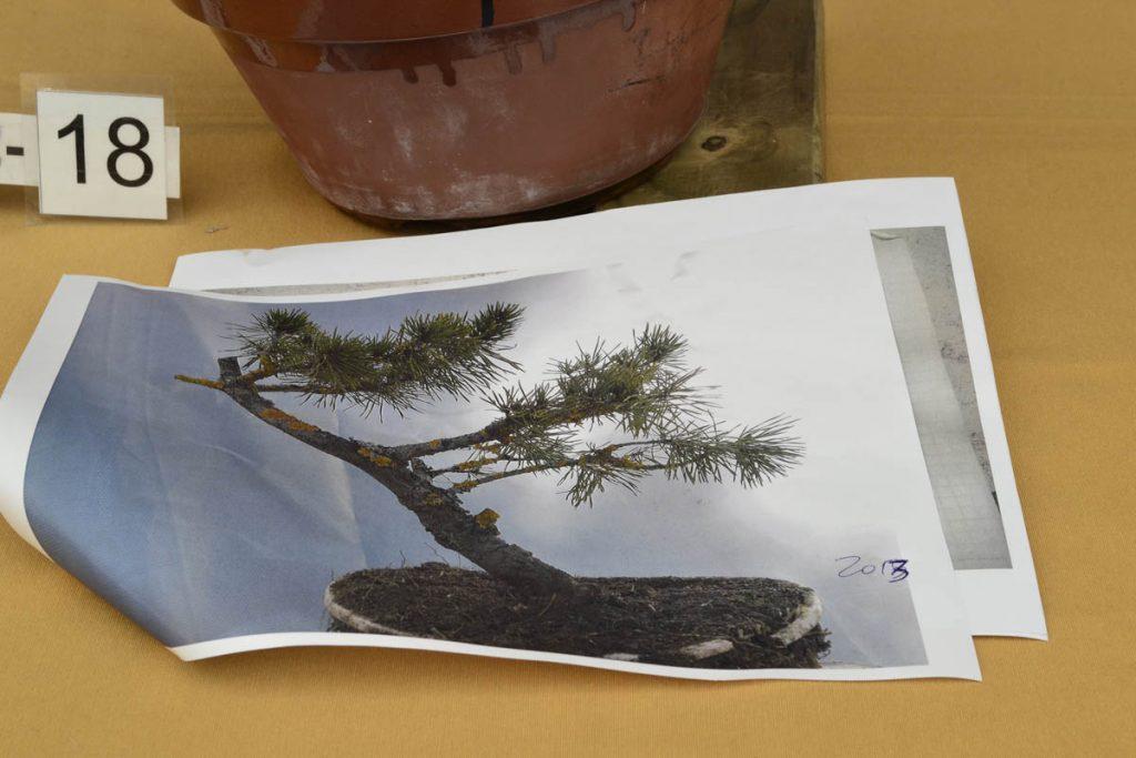 El árbol inicial es un palo.