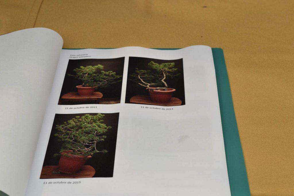 Las fotos del inicio muestran un árbol sin muchas cualidades.