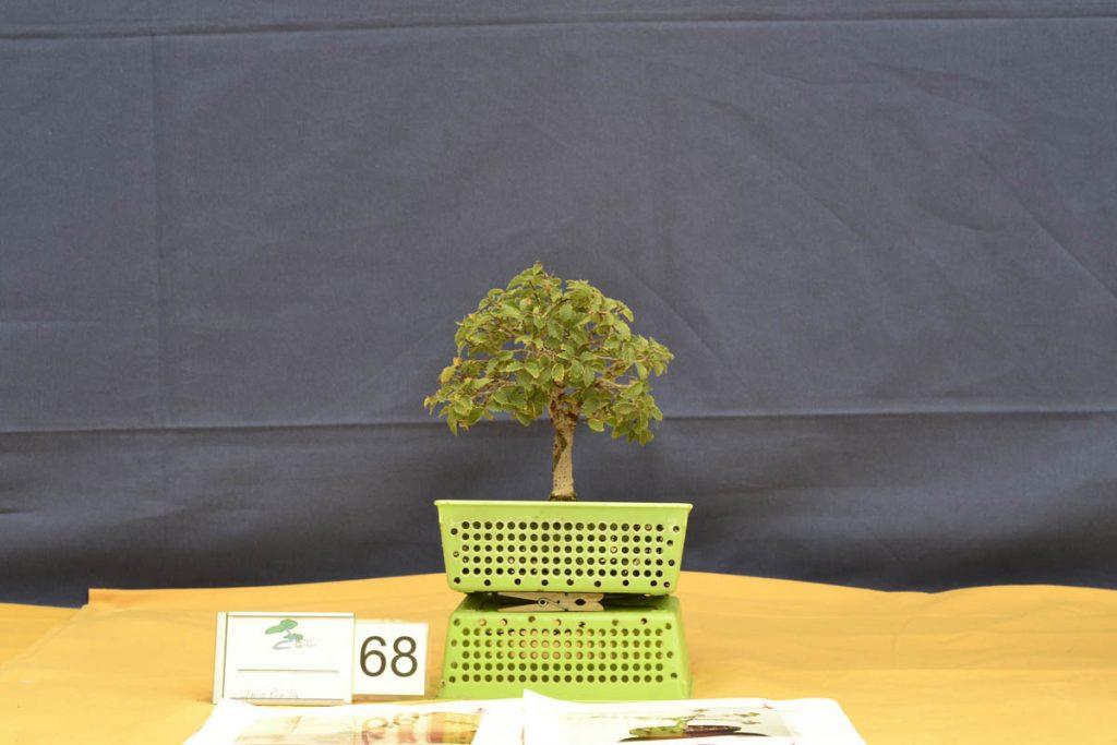 Simplemente fantástico. Hay que equilibrar un poco el verde y terminar de ramificarlo. Este trabajo es la esencia del concurso. La transformación de un material modesto en un futuro bonsái.